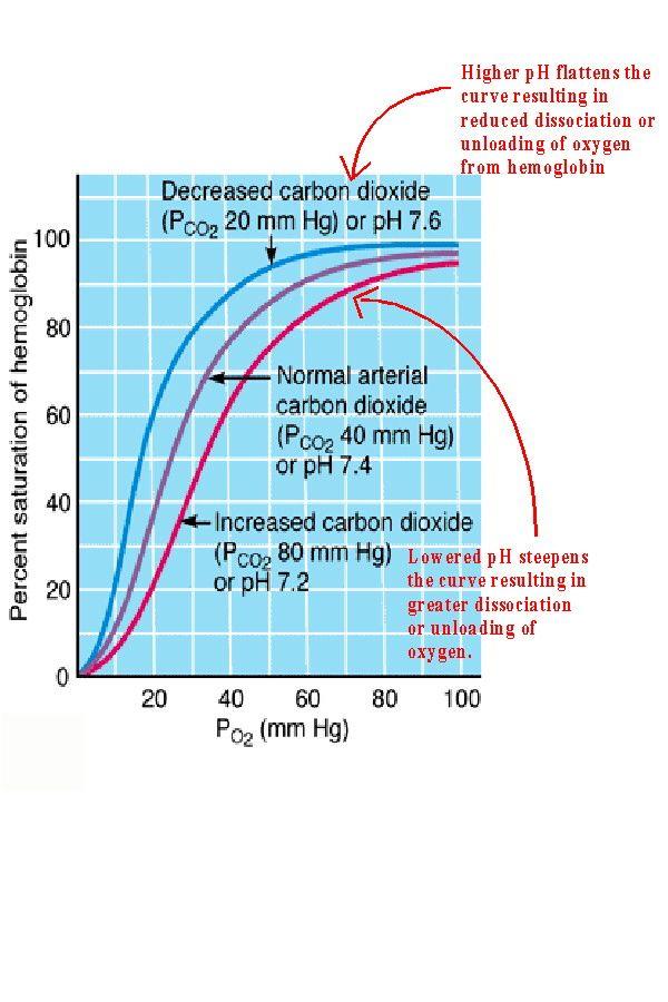 oxyhemoglobin dissociation curve - Google Search Nursing Nursing