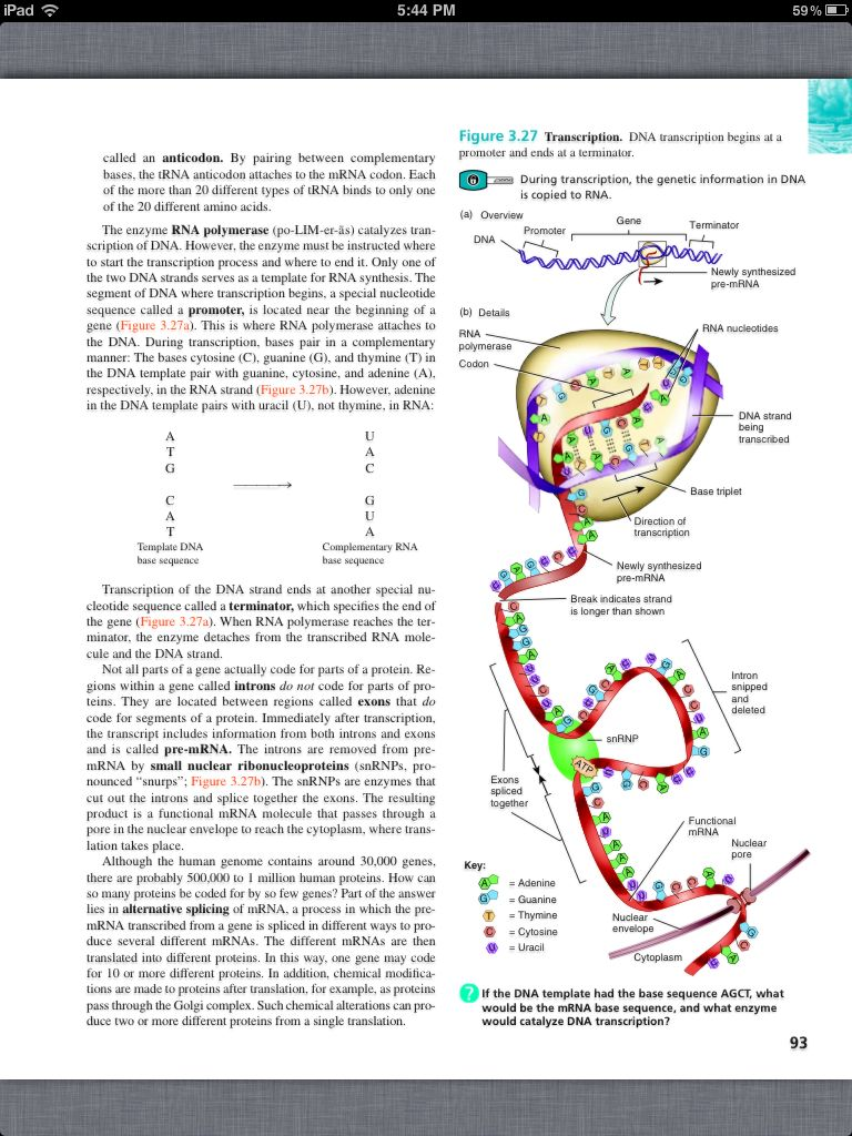 Principles of Anatomy and Physiology, Chapter 3, The Cellular Level ...