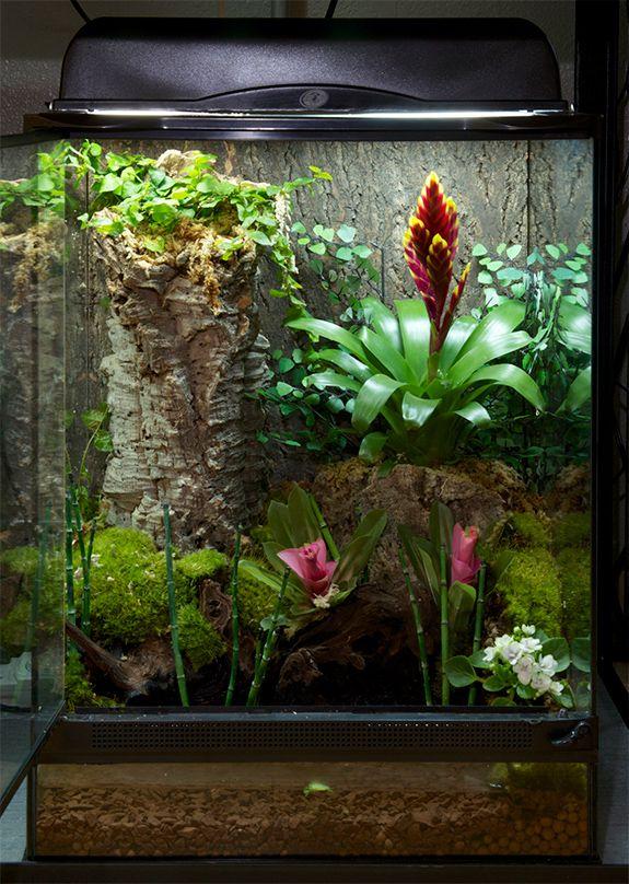 Lizard Terrarium Plants From Around The World Infolific Vivarium