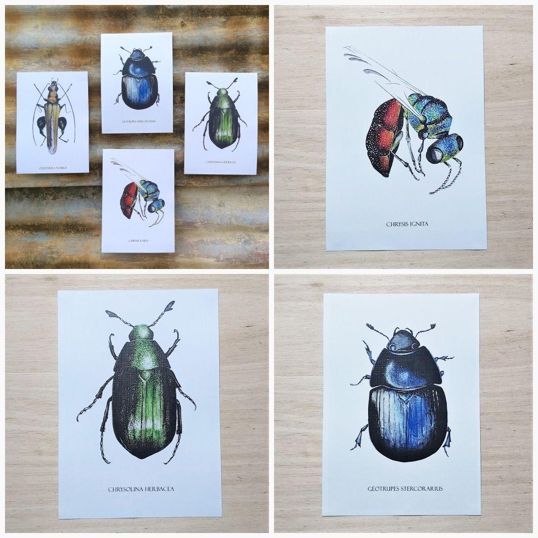 Set of 4 UK insect prints   Watercolour insect art print A5 (21x14.8cm)   Postcard sized prints   Linen bond paper   Multi set   Matching #ArchivalPrint #HomeOfficeArt #NatureWallArt #EducationalPrint #ScienceDrawings #InsectPainting #GardenCreatures #HomeschoolNature #EntomologyArt #UkWildlife