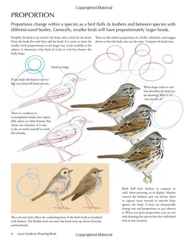 A few final tips for drawing a realistic bird