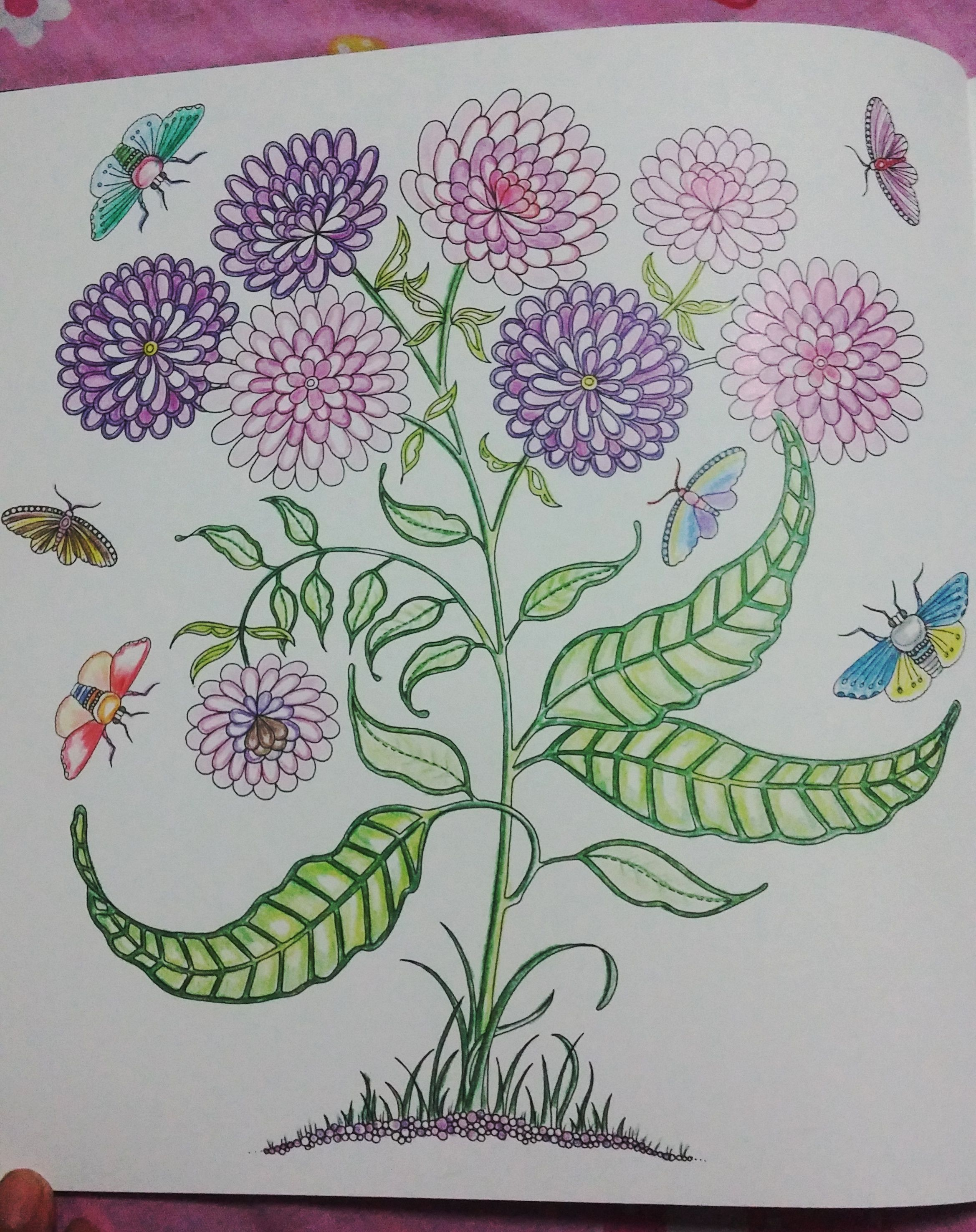 secret garden johanna basford flowers - Google Search   Coloring ...