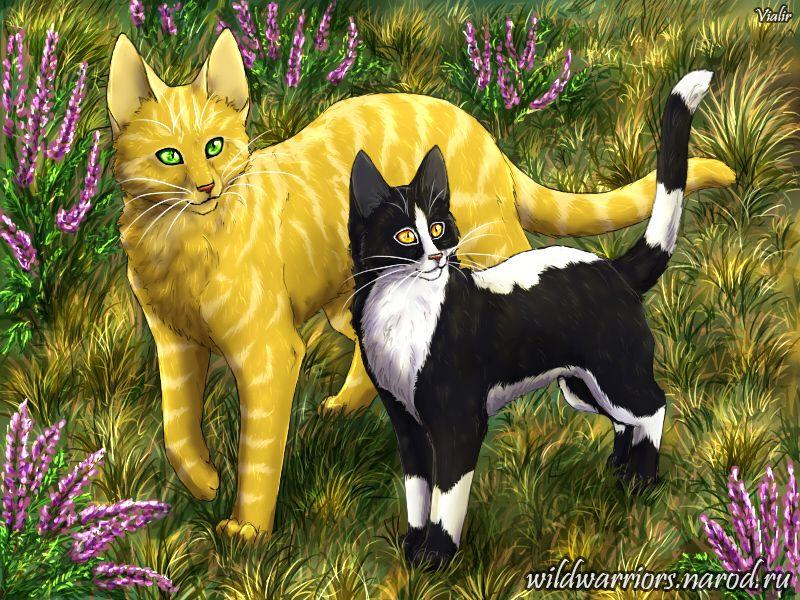 Sandgorse Warrior Cats