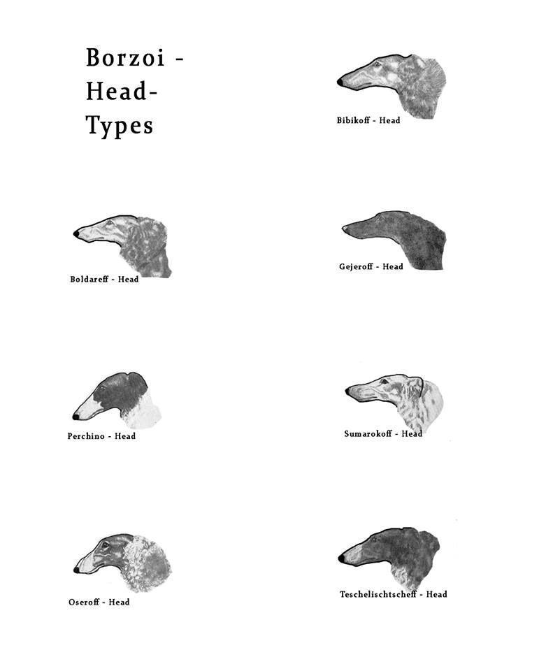 Borzoi Head Types   galgos y otros lebreles   Pinterest   Barsoi ...