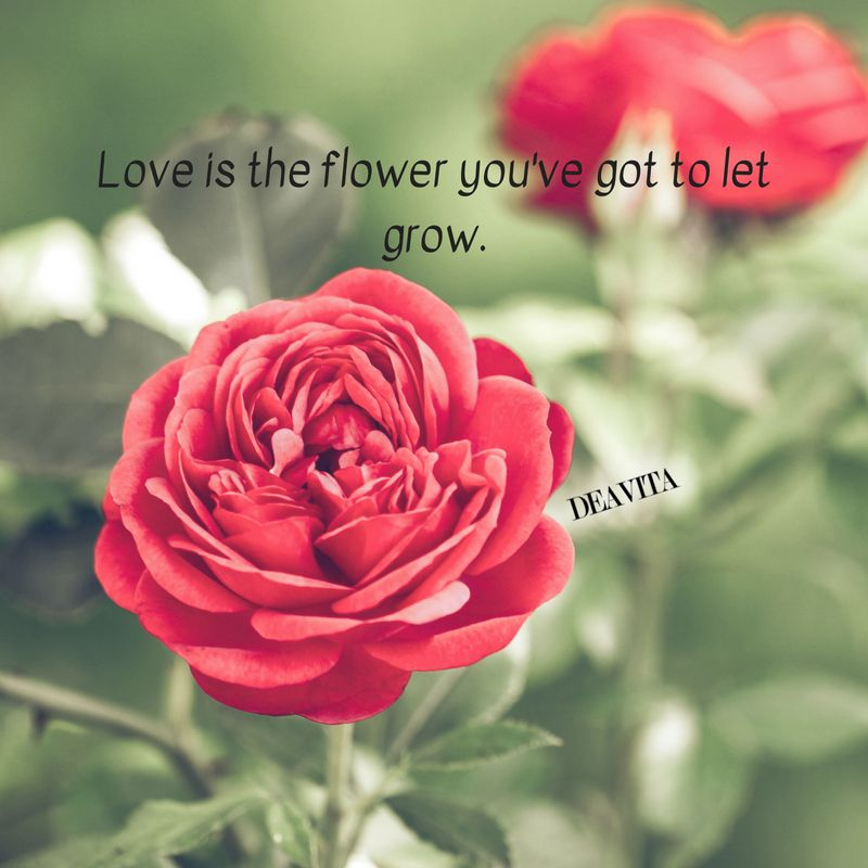 Love Flower Short Quotes And Cards Beautiful Photos Cards Flower Quotes Flower Quotes Beautiful Flower Quotes Love Flowers