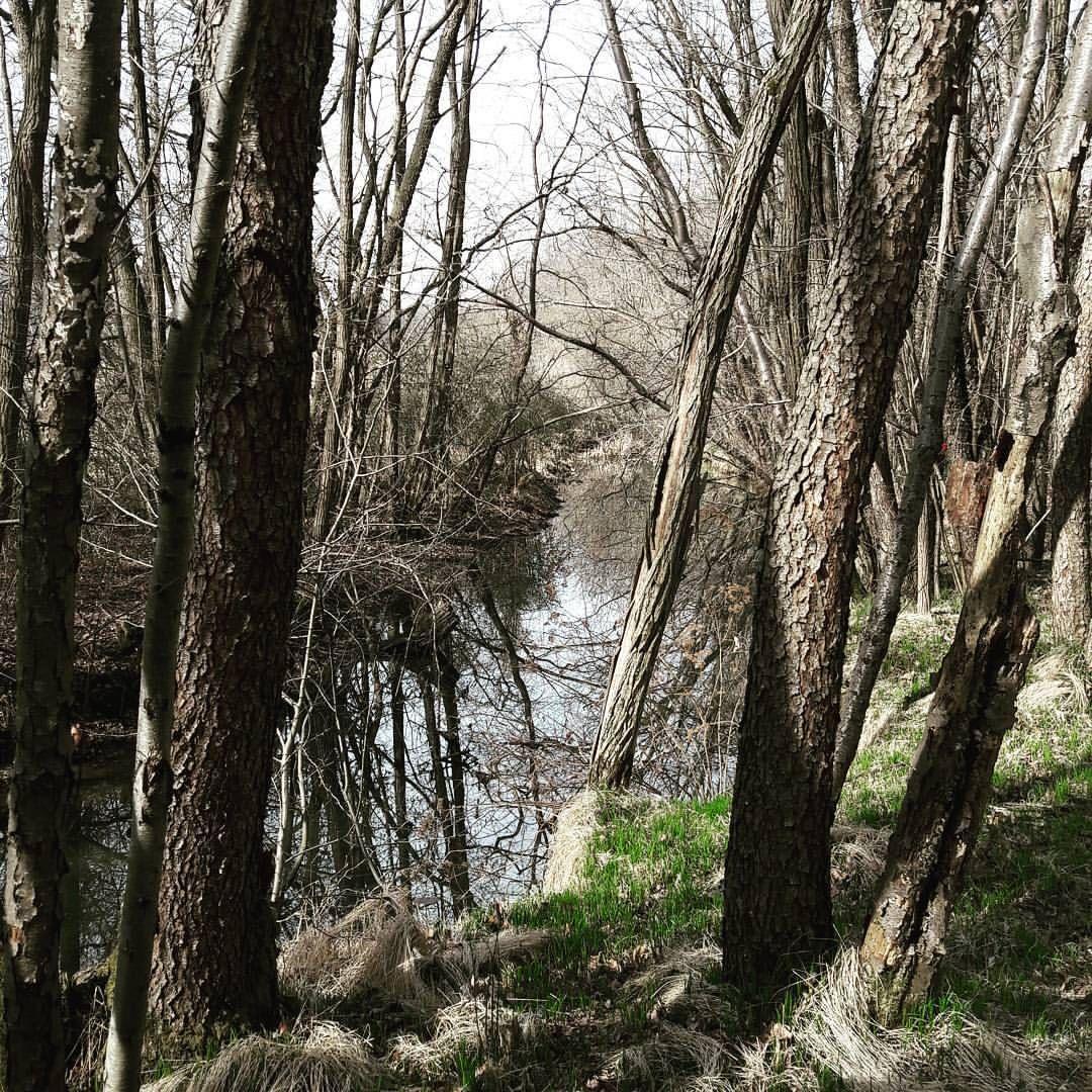"""15 Likes, 1 Comments - Igor Cazzolato (@icazzolato) on Instagram: """"#ticino ... sempre un ottimo posto per correre in mezzo alla natura.  #gallaraterunners #promorun…"""""""
