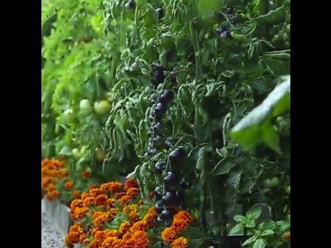 Front Yard Vegetable Garden