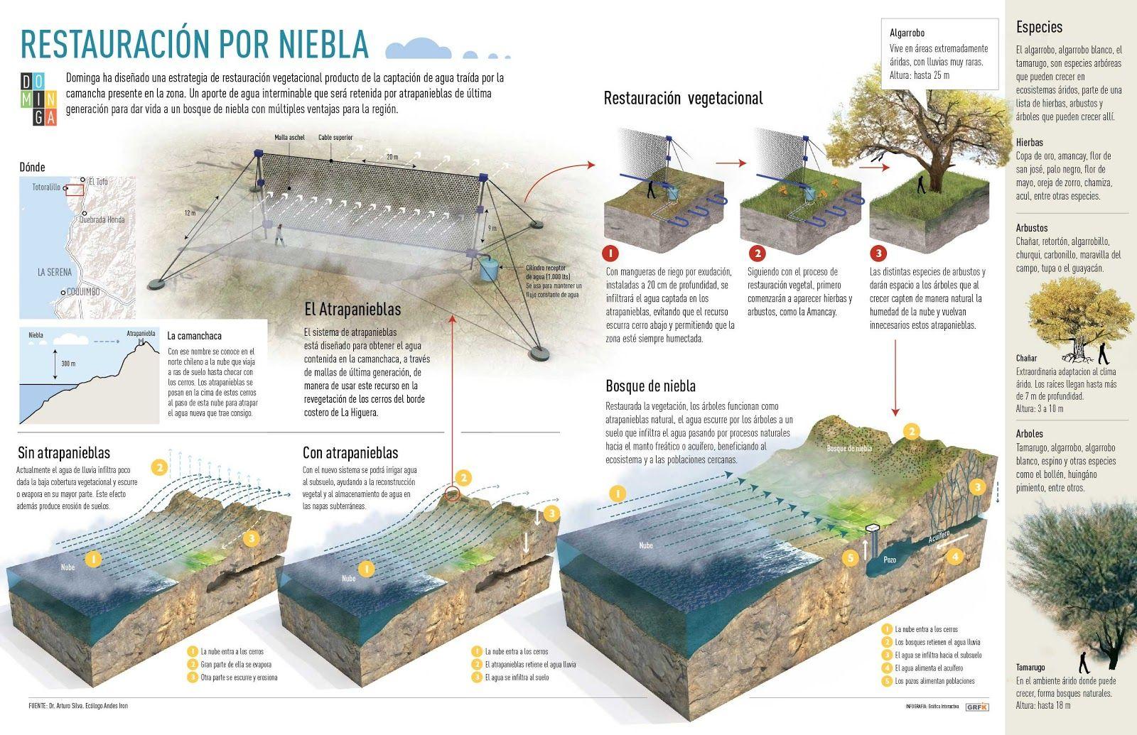 Riparium Perú Paisajismo Acuático Aquascaping Los Atrapanieblas Paisajismo Acuático Aquascaping Ciudad De Lima