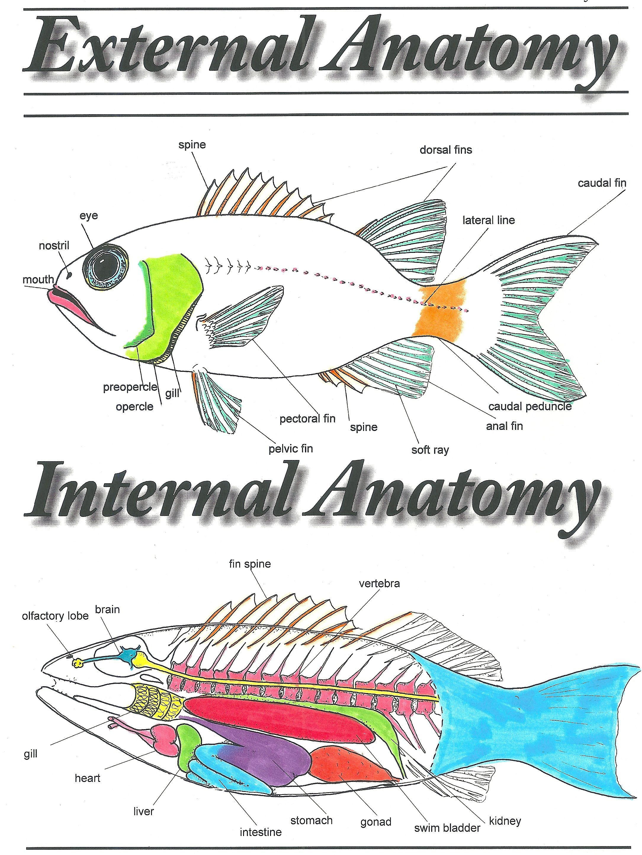 Fish Biology Coloring Sheets Marine Biology Fish Anatomy Biology [ 2888 x 2168 Pixel ]