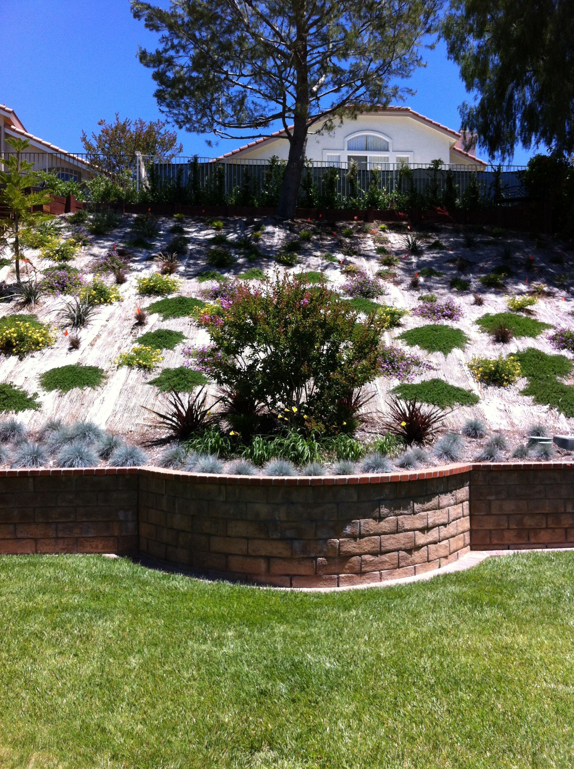 Beautiful Hillside Landscape Job In Moorpark Ventura County California By Scarlett S Landsca Backyard Hill Landscaping Landscape Design Hillside Landscaping