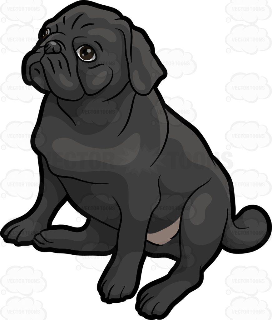 A Cute Little Black Pug Black Pug Pug Cartoon