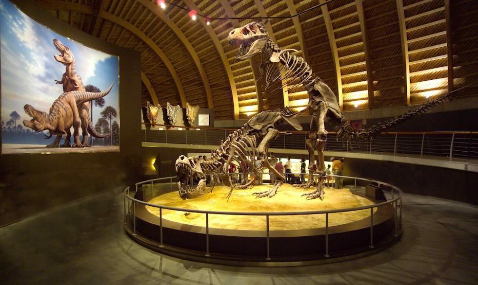 Qué Mejor Idea Para Un Día Nublado Que Pasar La Tarde Visitando El Muja Situado En La Carretera Que Une Colunga Y Lastre Museos Jurasico Tipos De Dinosaurios