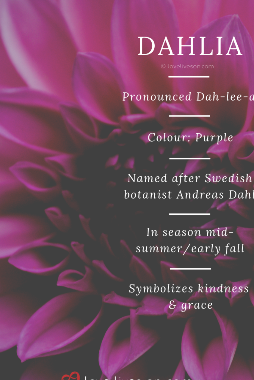 Funeral Flower Meaning Purple Dahlias Like Pink Dahlias Symbolize Grace Kindness It S A Great Ch Funeral Flowers Rose Meaning Purple Flower Arrangements