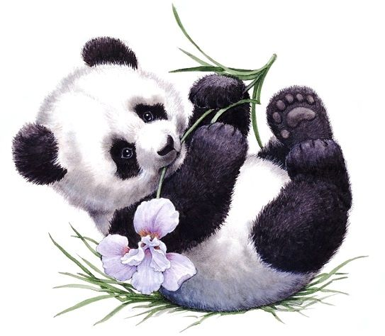 Priceless image inside printable panda pictures
