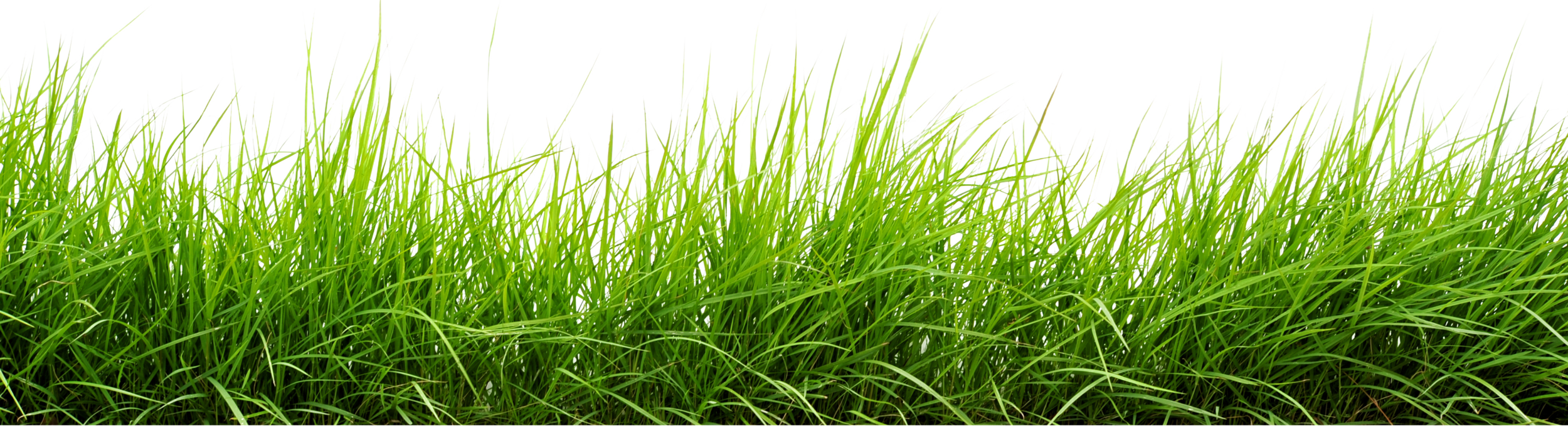 how to add grass in photoshop