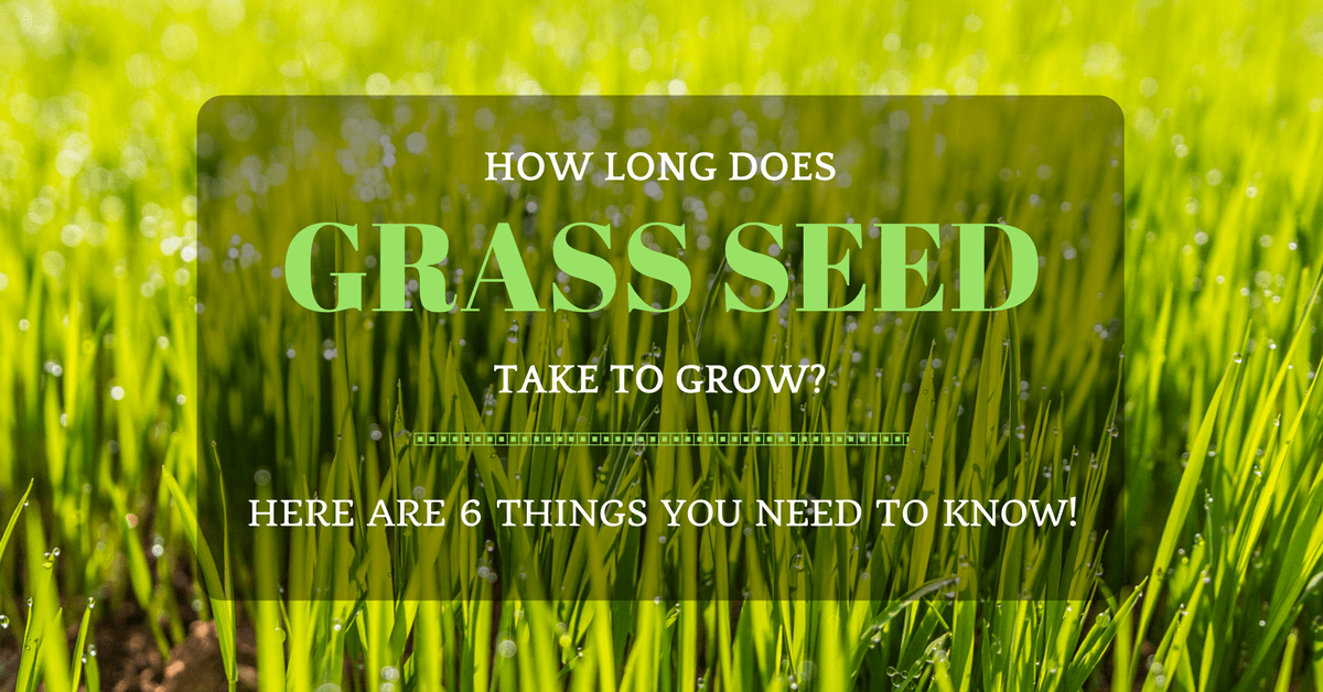 Ever Wonder How Long Does Grass Seed Take To Grow Here Are 6 Things You Need To Know Grass Seed Grass Care Grass