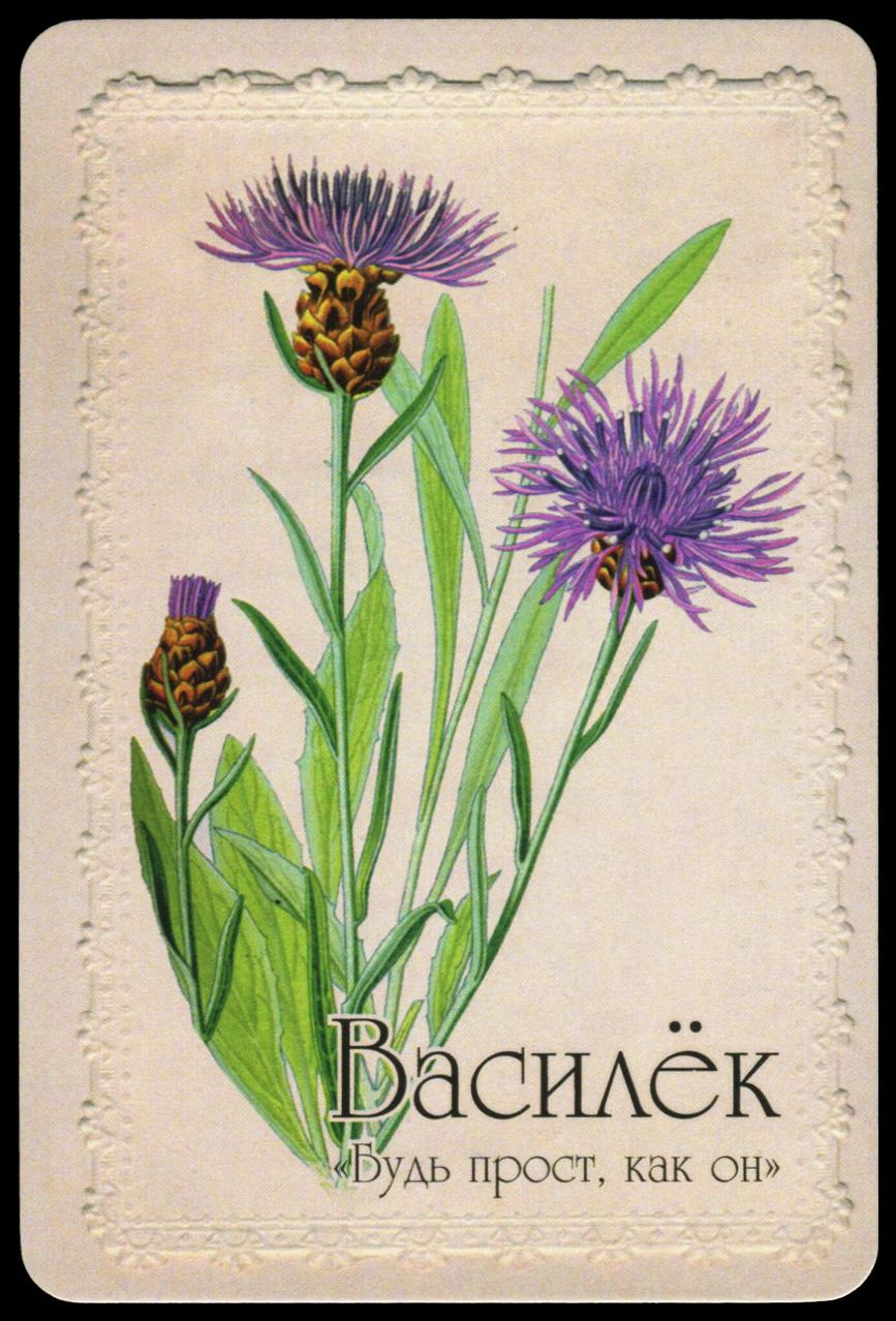 Cornflower From Fortune Telling Cards Selam Or Language Of Flowers Vasilek Yazyk Cvetov Oracle Oraclecards Flowers Corn Yazyk Cvetov Znacheniya Cvetov Cvety