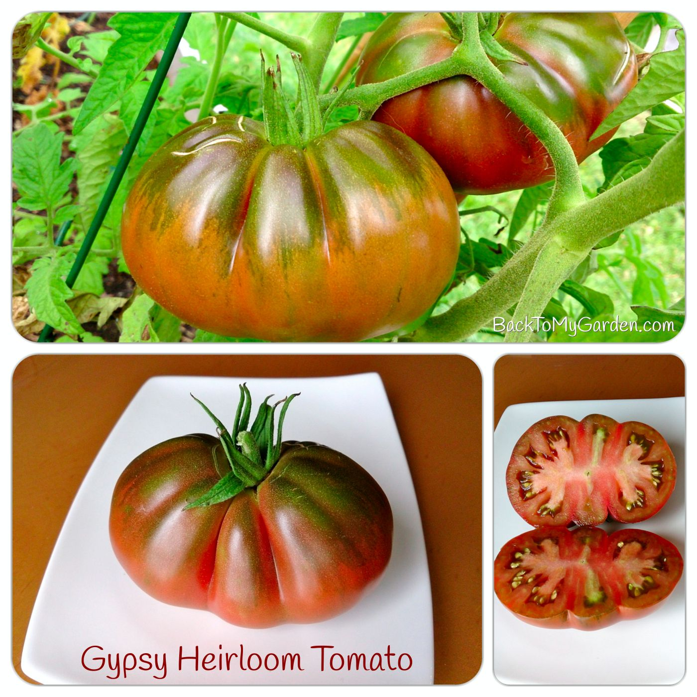 Nearly 40 passionate gardeners participated and shared their best ideas for helping you grow amazing heirloom tomatoes in pots, bags, patio containers, raised beds, even milk crates!  We have a variety of zones represented and several countries.  This list of gardening experts is invaluable. Common Sense Homesteading is honored to be included in this list!