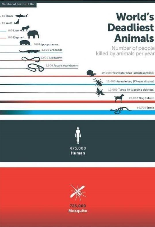 World's Deadliest Animal 세계에서 가장 위협적인 동물들 순위