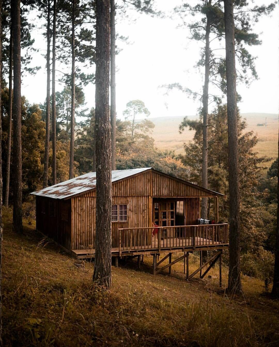 The Cabin Chronicles Cabin, Rustic cabin, Cabins in the