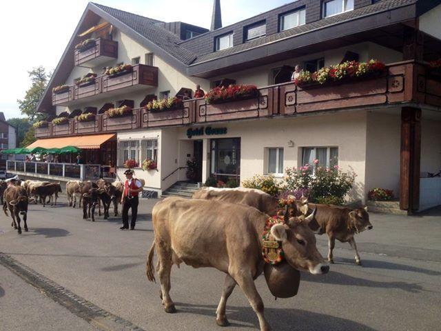 Wildhaus , Alpabzug