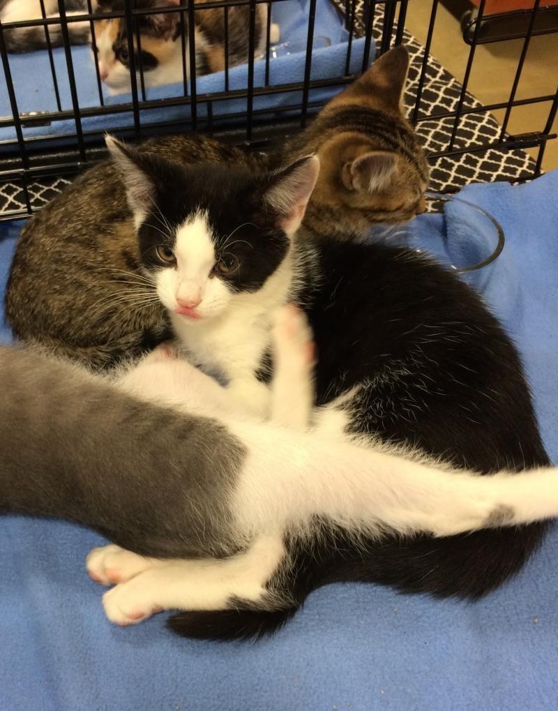 Adopt MacGregor on Petfinder Adoption, Pet adoption