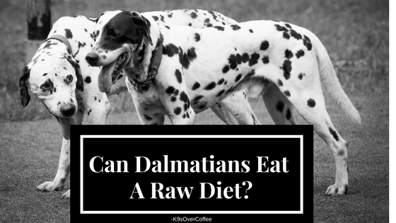 K9sovercoffee Can Dalmatians Eat A Rawdiet Raw Dog Food