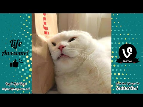 (15) Try Not To Laugh Animals Funny Cats Videos 2019