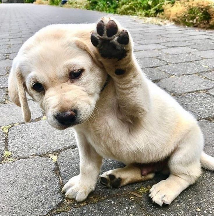 Adorable Puppy Saying Hi Wavingpup Pupsfordays Furryfamily