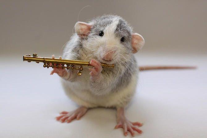 Картинки, картинки про смешных крыс
