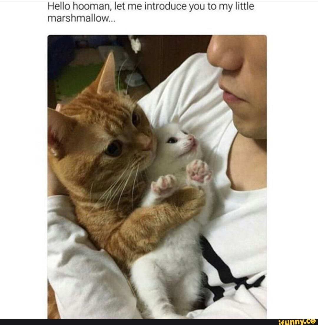 Hello Hooman Let Me Introduce You To My Little Marshmallow Ifunny Funny Animal Memes How To Introduce Yourself Cute Funny Animals