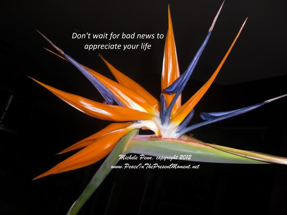 Don't wait for bad news to appreciate your life. ~ Michele Penn ~ bird of paradise