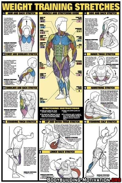 Personal Trainer - TOP 1O WEIGHT TRAINING STRETCHES - The best
