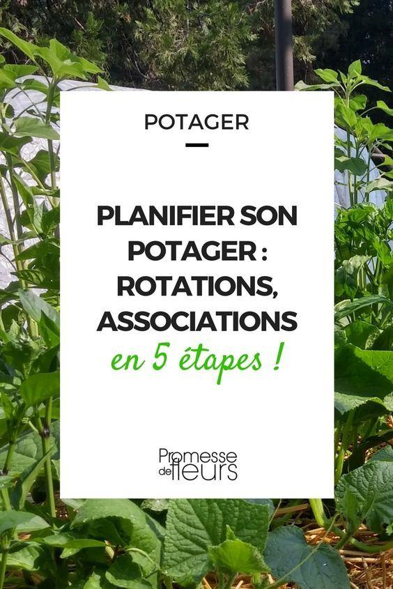 Planifier Son Potager Rotations Et Associations En 5 Etapes