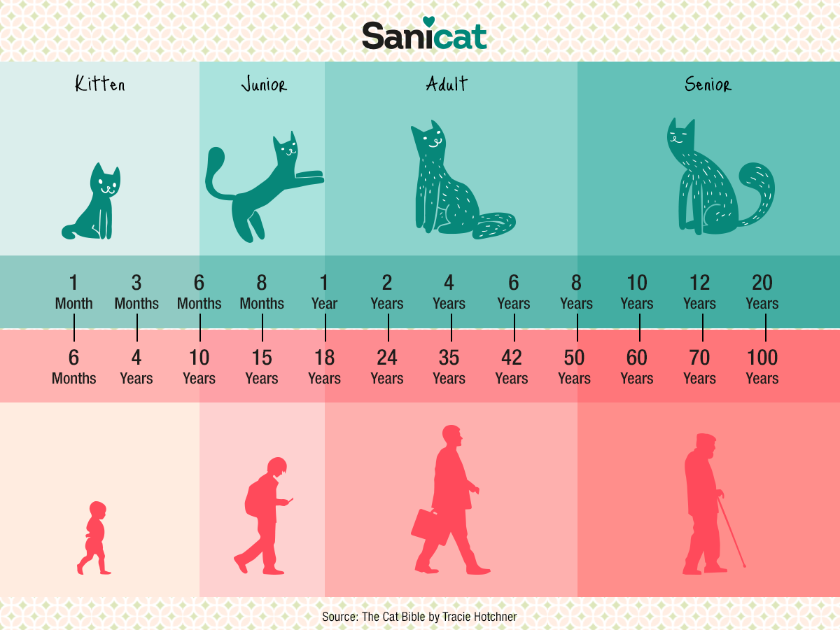 Sanicat UK What age is your cat? Cats, Pets