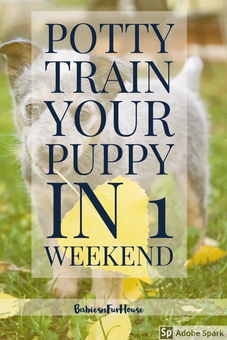 How To Potty Train Your Puppy In One Weekend | Babies&Fur House