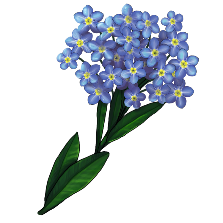 Картинки цветка незабудки для детей