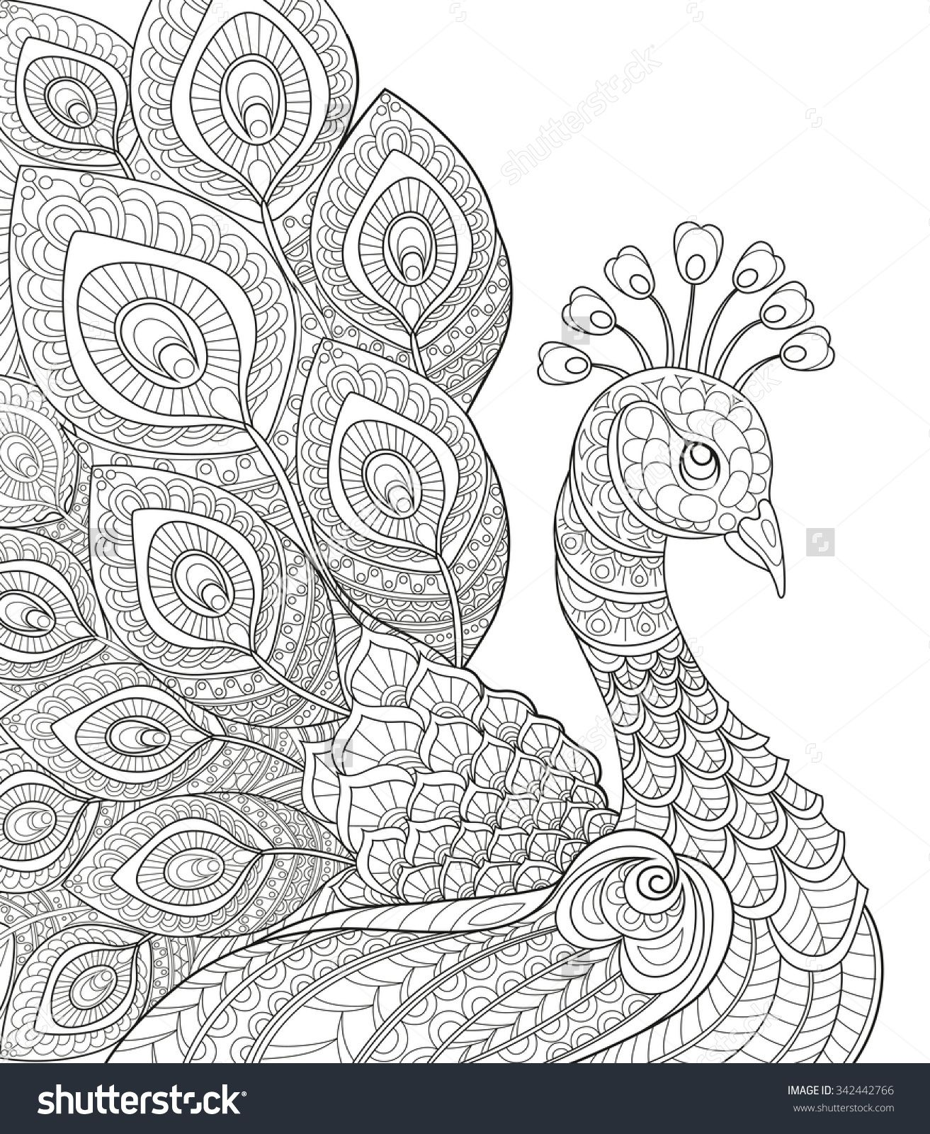 Free coloring pages of peacock feathers coloring everyday printable - Peacock Adult Antistress Coloring Page Black And White Hand Drawn Doodle For Coloring Book