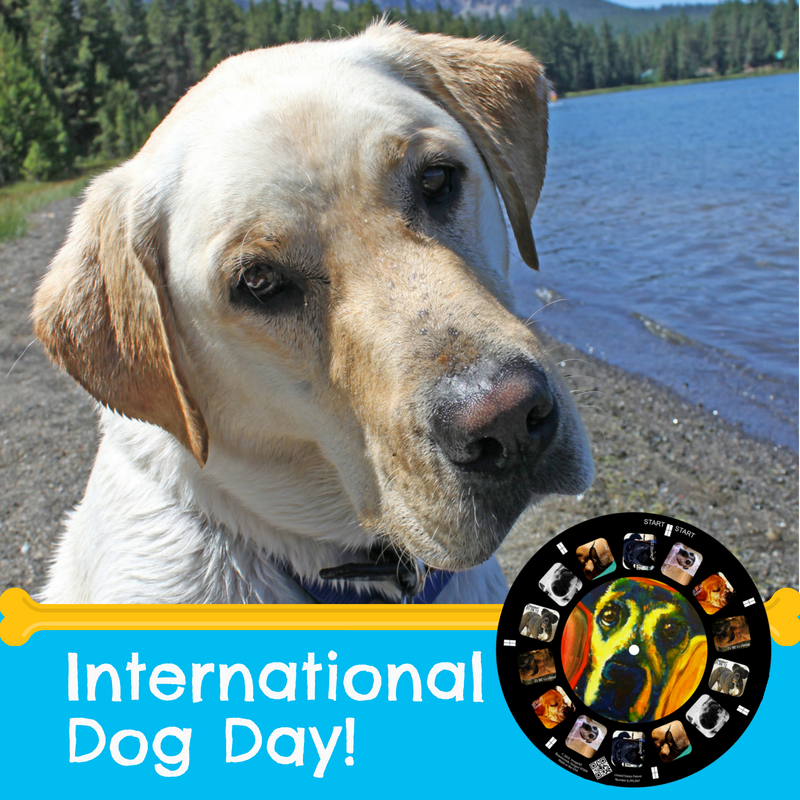 We Dogs At Retroviewer Show Us Your Pups In The Comments Below To Celebrate Internationaldogday International Dog Day Dogs Labrador Retriever