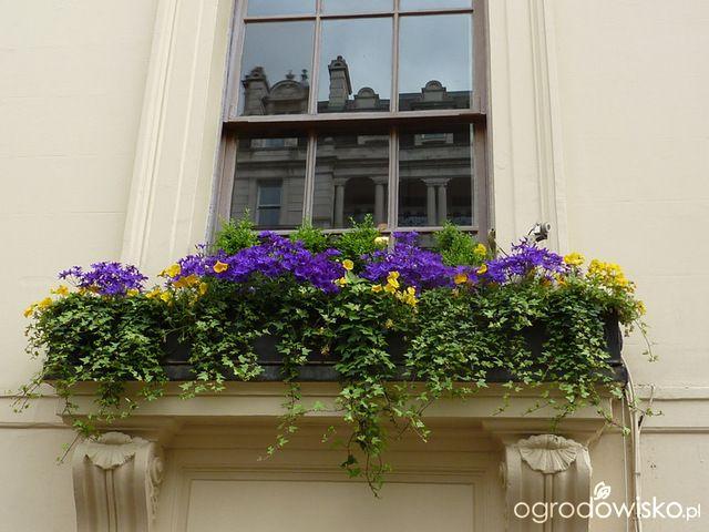 Galeria Zdjec Nastrojowe Kompozycje Wiosenne W Donicach Ogrodowisko Window Box Window Boxes Window Decor