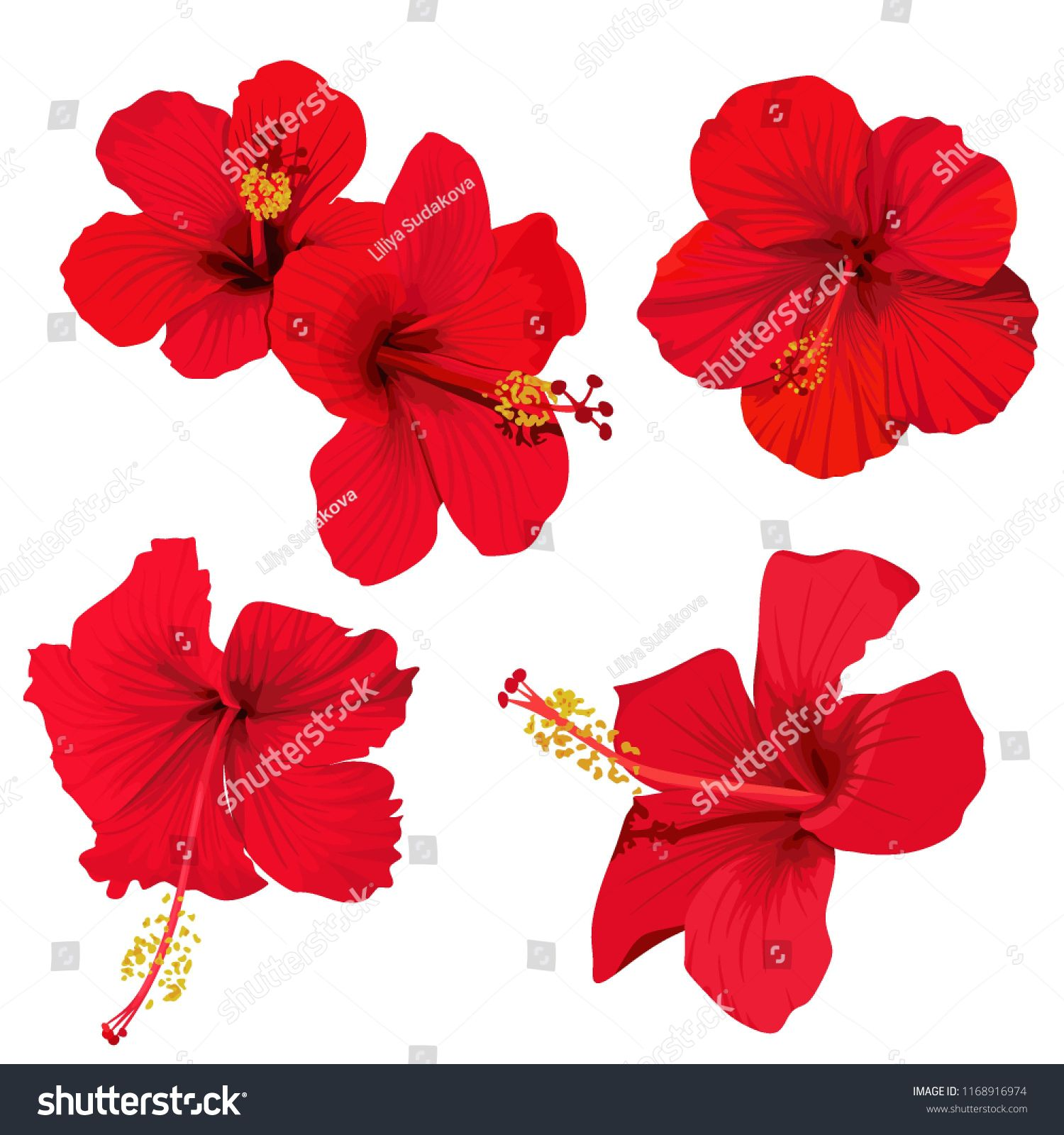 Hibiscus Flower Vector Clip Art Set Of 5 Red Flowers Tropical Planrs Sponsored Ad Clip Art Vector Hi Art Set Hibiscus Flowers Graphic Design Illustration