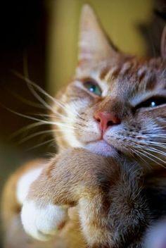 Pin Von Anna Auf Katzen Mit Bildern Katzen Rassen Witzige Katzenfotos Katzen