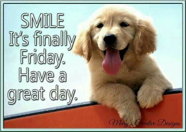 Pin by Deirdre Burness on 1 Must Love Dogs   Happy friday ...