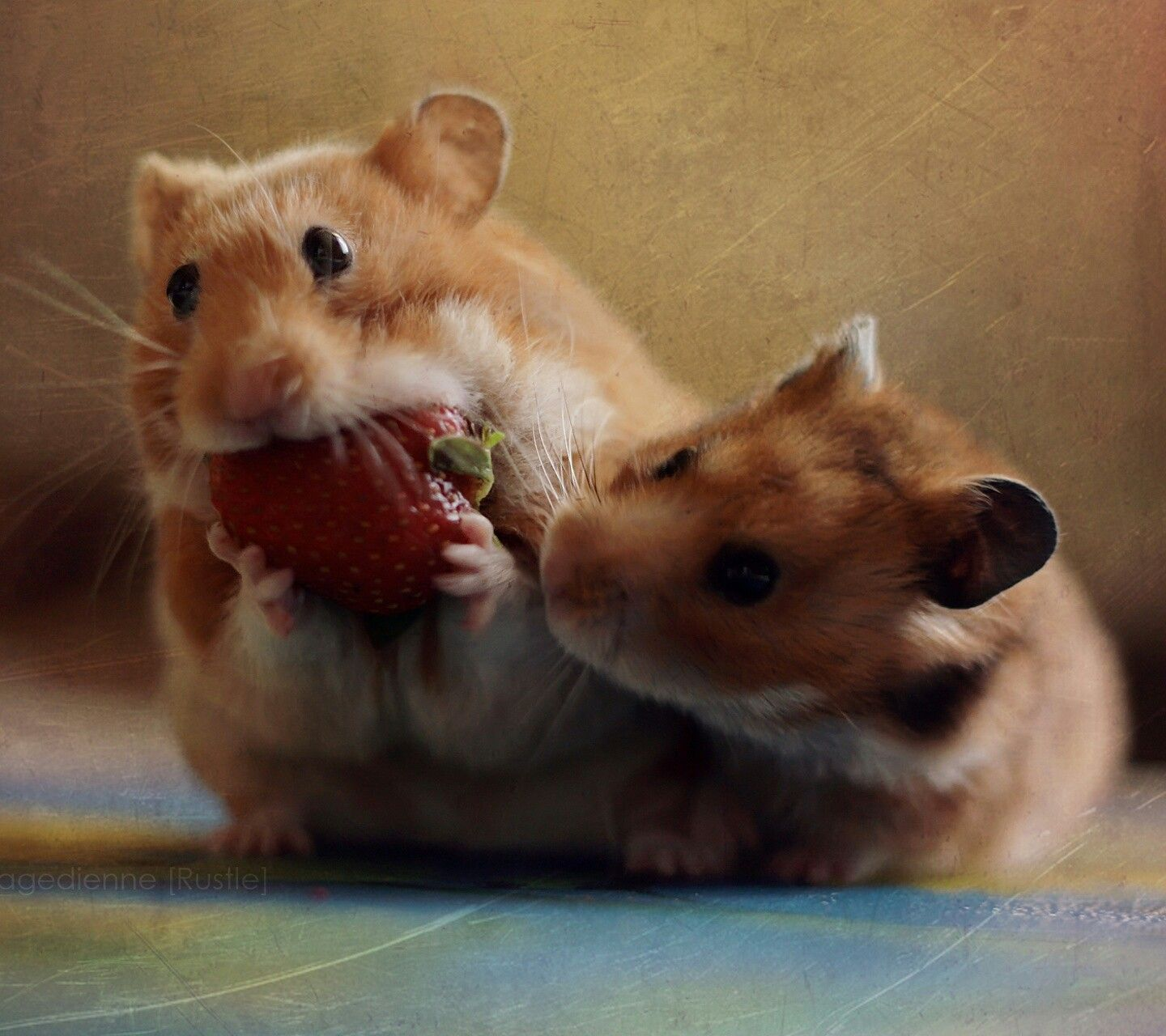 Animal Cute animals, Funny animals, Cute hamsters