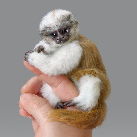 Ashton Drake Little Kima 5 25 Amazing Amazon Finger Monkey Series Living In The Treetops Of The Amazon Rainforest Finger Monkey Baby Finger Monkey Baby Monkey