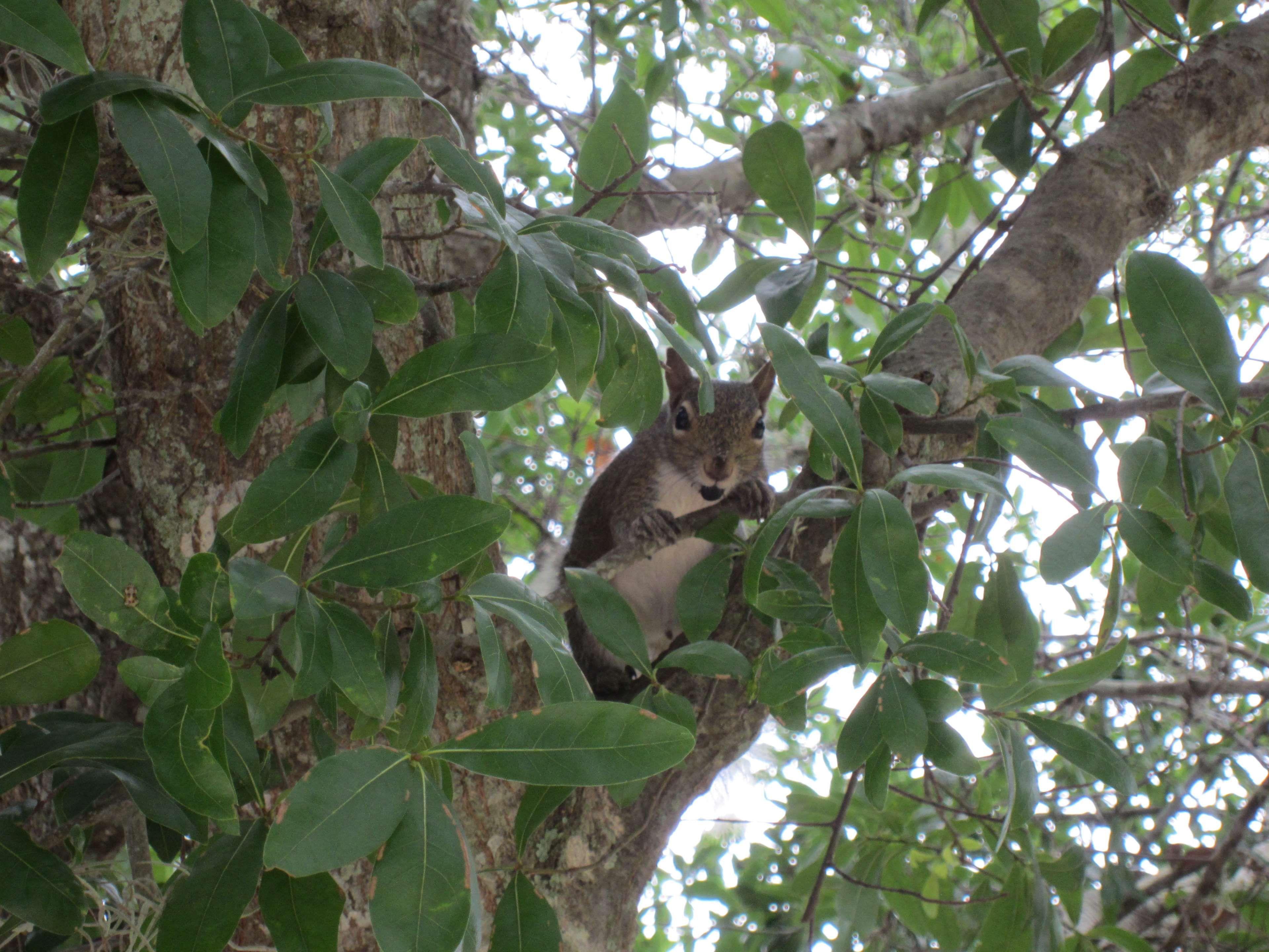 #albero #green #scoiattolo #squirrel #tree #verde