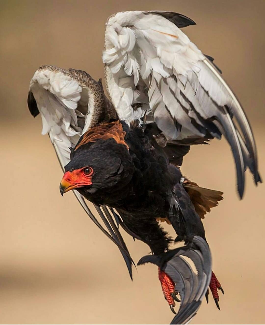 Wildlife Photography Techniques Einzigartige tiere