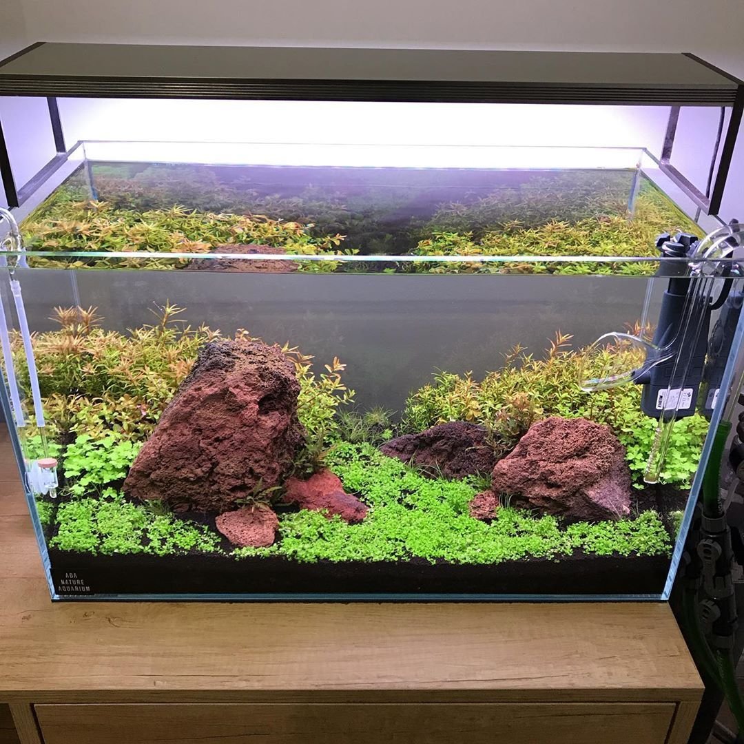 Diorama Tank Style 20 Days Old Aquarium Design Tank Design Planted Aquarium