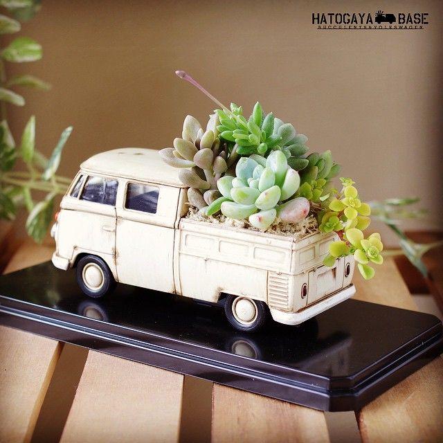 鳩ヶ谷ベース On Instagram 即完売となったベージュのタニクスワーゲンlサイズをオーダー制作いたしました ボディーカラーを活かすために ロッティー や 姫秋麗 で淡いトーンの寄せ植えです 手 Succulent Arrangements Succulent Terrarium Mini Garden