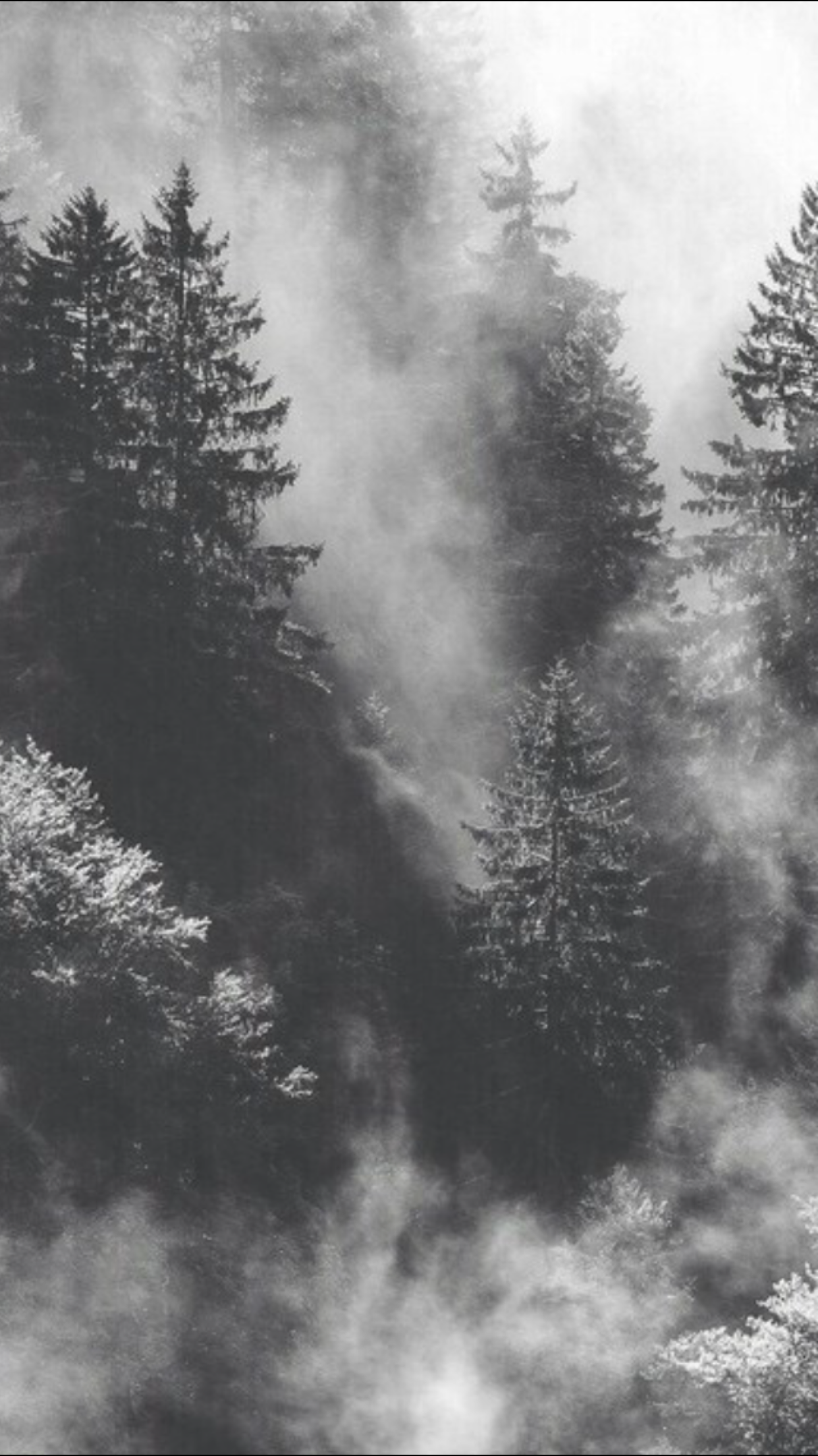 Black And White Forest Trees Woods Wallpaper Forest Wallpaper Black Tree Beast Wallpaper